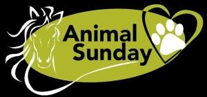 animal sunday